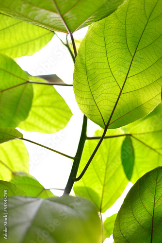 green leaves background © Aleksey Stemmer