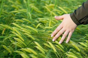 weizen pflanzen streichen