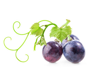 Ripe grapes with leaves on white background
