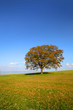 Single tree in the meadow by the lake