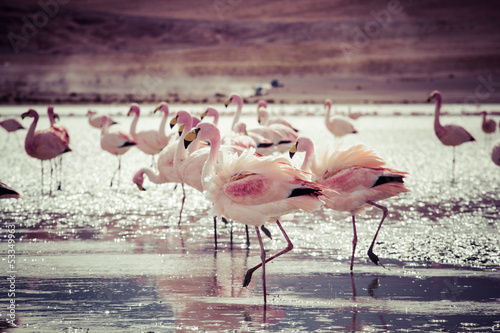 Papiers peints Flamant Flamingos on lake in Andes, the southern part of Bolivia