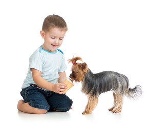 kid feeding dog isolated on white
