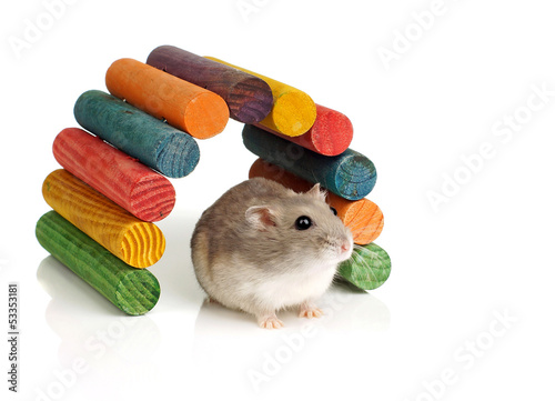 Dwarf Hamster Sitting in Front of Colourful Wooden Arch