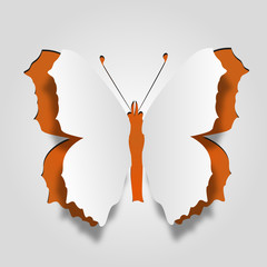 Conceptual orange  paper butterfly on white background
