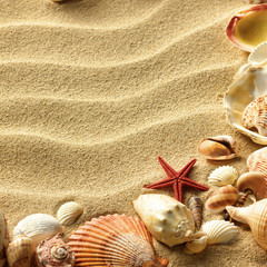 Sea shell on sand