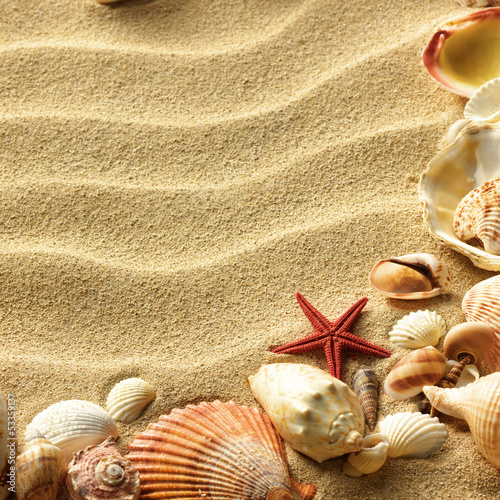 Fototapeta Sea shell on sand