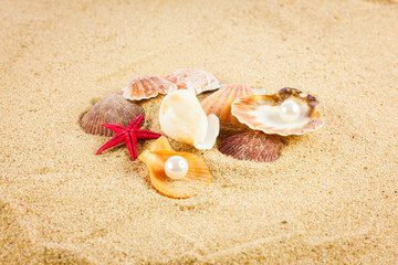 pearl on the seashell . The exotic sea shell . Treasure from the