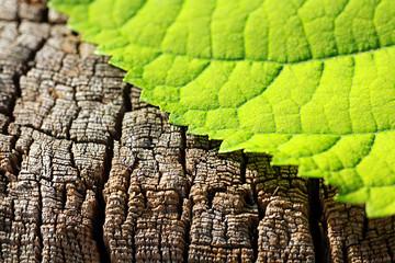 Natur | Blatt auf einem Baumstamm | leaf