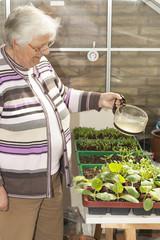 Rentnerin bei der Gartenarbeit im Gewächshaus