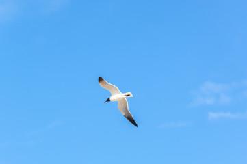 Sea Birds in Flight