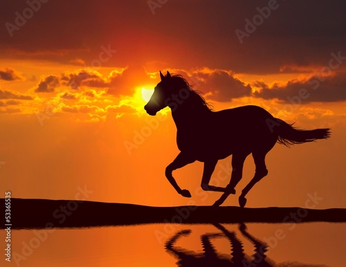 canvas print picture Horse running during sunset with water reflection