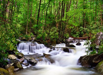 River in the Smoky Mountains