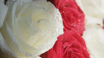 Water drops falling on roses