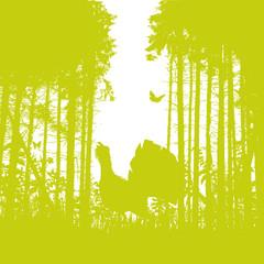 Auerhahn im Wald