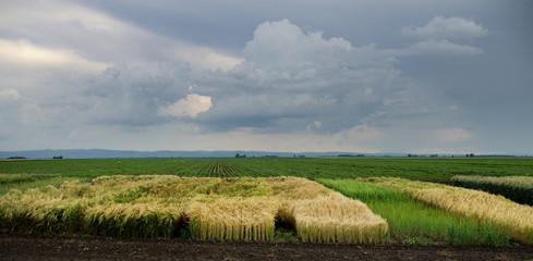 crops reserch