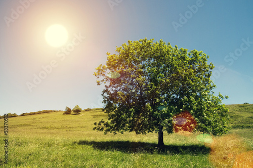 tree in bright sun