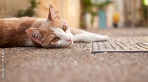 Jeune chat dans une ruelle d'Arles