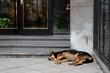 Stray street dog sleeping in front of a city building
