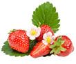 Den Sommer genießen: Frisch gepflückte Erdbeeren