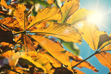 sunlight leaves