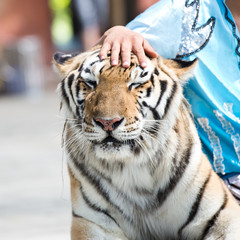 Trainer and tiger