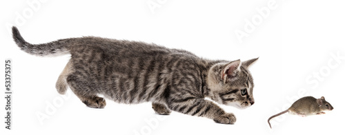 kitten and mouse isolated on a white background