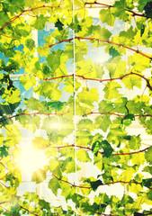 sunshine vines