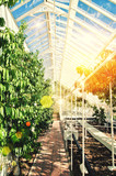 sunlight greenhouse
