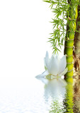Fototapety bambou asiatique et lotus blanc
