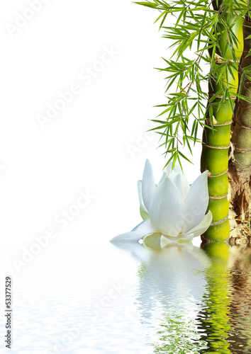Foto op Canvas Bamboe bambou asiatique et lotus blanc