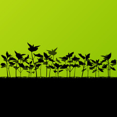 Nettles wild herbs plants detailed silhouettes illustration back