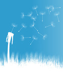 Dandelion blow vector background concept