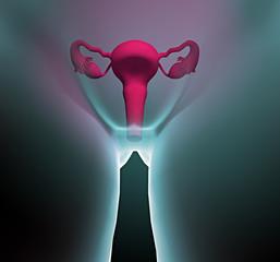 Apparato riproduttivo femminile utero
