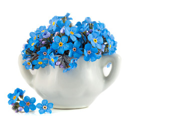 Bunch of vivid blue forget-me-not flowers in the porcelain pot