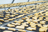 bananas in solar drying chamber