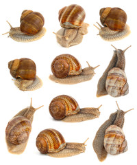 Snails on white background set.