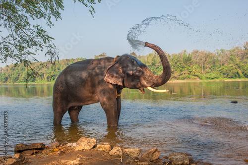 Poster Olifant Elephant bathing, Kerala, India