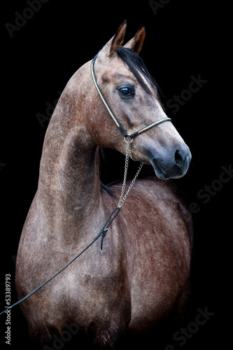 Gray horse head isolated on black background.