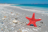 red sea star and blue water