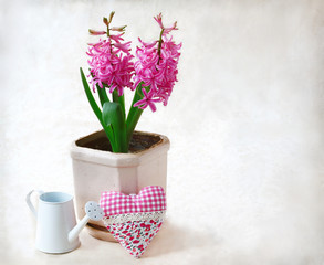 Spring flowers  in pot  and white watering can