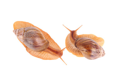 Snails  isolated over white background