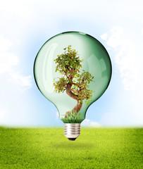 Ecologia - Proteggere la Natura