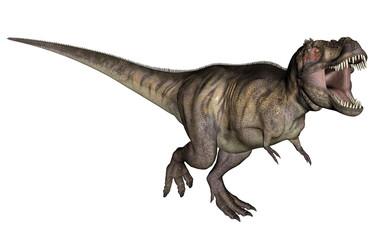 Tyrannosaurus dinosaur