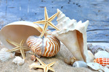 Muscheln und Seesterne in Sand vor blauer Wand