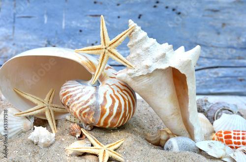 Muscheln und Seesterne in Sand vor blauer Wand - 53397518