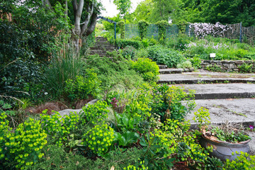 Beautiful old garden with stone stairs