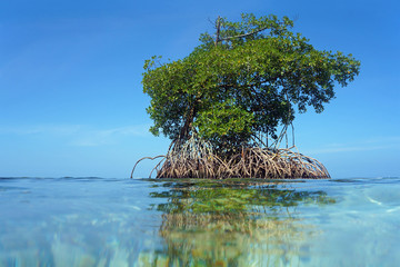 Islet of mangrove with blue sky