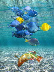 Underwater lights and colorful fish