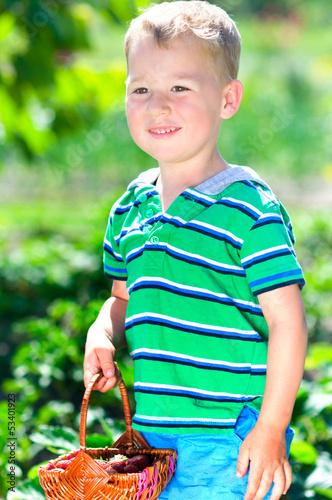 Kleiner Junge pflückt Erdbeeren
