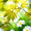 Jahreszeit - Frühling